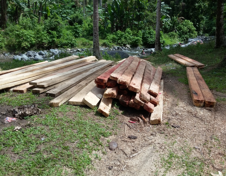 illegal cut lumber012317a.jpg