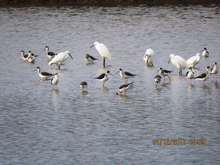 migratory waterfowl2