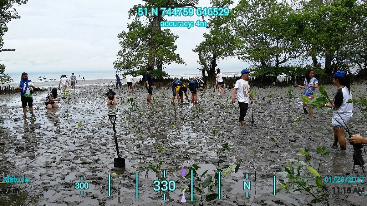 students plant mangroves2